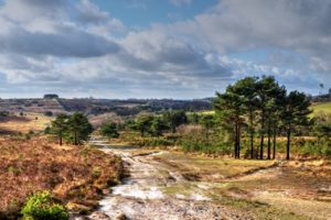 Ashdown Forest East Sussex